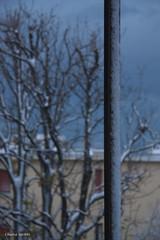 Bora effect (hachiko_it) Tags: blue winter sky italy cloud house snow cold tree clouds canon grey wind blizzard bora trieste eos450d canoneos450d chiarasirotti