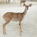 antelope 3