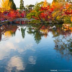 Helpless / Kyoto, Japan (yameme) Tags: travel japan canon eos maple kyoto   kansai  cpl   eikando  24105mmlis 5d3 5dmarkiii