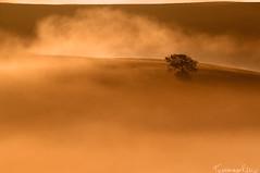 Dancing with Fog (Tommaso Renzi) Tags: morning mist tree texture fog sunrise countryside tommaso foggy tuscany toscana controluce myst tuscanycountryside tommasorenzi