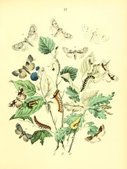 n404_w1150 (BioDivLibrary) Tags: butterflies insects beetles arthropoda smithsonianinstitutionlibraries pictorialworks bhl:page=12434265 dc:identifier=httpbiodiversitylibraryorgpage12434265 bhlarthropod