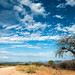 """Baobab Tree on Dirt Road in Namibia • <a style=""""font-size:0.8em;"""" href=""""https://www.flickr.com/photos/21540187@N07/8291659043/"""" target=""""_blank"""">View on Flickr</a>"""