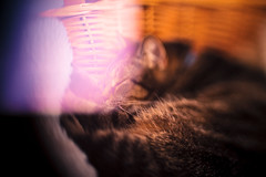 Light Leak Cat (michaelnugent) Tags: cat canon lens eos 50mm mark ii l 5d mm 50 leak ef whacking lenswhacking