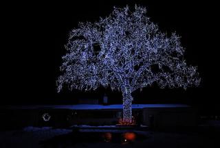 christmas tree holiday lights - bloomington, minnesota