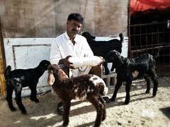 Mercy (Ahmed Fareed 2010) Tags: animal milk kid sheep goat mercy          flickrandroidapp:filter=none