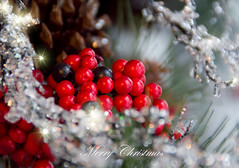 12-24-2012~Merry Christmas Eve (SimplyAmy74) Tags: christmas holiday ice sparkles merry redberries