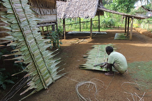 Usage of mangroves and sago palm leave in Malaita, Solomon Islands. Photo by Wade Fairley, 2012.