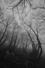 groviglio nella foschia (voyager7000) Tags: neve punta nebbia montagna freddo cima nuoro lamarmora desulo