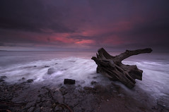 Wild Wood (SilverRainbow.) Tags: wood sunset sea sky tree beach rock coast tide stump hightide d90 cocklawburn scremerston silverrainbow