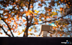 Danbo&! (//ZERO) Tags: winter sunset sky anime fall umbrella sandiego manga lamesa socal parasol viewing danbo danbooru revoltech socalwinter danboard danboru briercrestpark