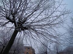 Ice (Clerss Malisha) Tags: winter cold ice gelo freezing inverno freddo ghiaccio
