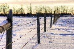 Fence Friday Special (John Andersen (JPAndersen images)) Tags: trees winter wild sky white snow canada nature canon fence landscape farm alberta barbedwire bonaccord jpandersenimages