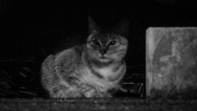 Today's Cat@2013-01-09