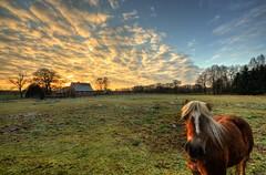 Pferd im Winterdämmerung (Sunstonecruiser) Tags: sunset horse farmhouse rural abend landscapes zonsondergang dämmerung landschaft pferd paard landscapedreams