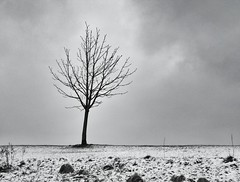 Standing in the cold (Broo_am (Andy B)) Tags: morning sky snow cold tree ice grass weather silhouette horizontal grey weeds mood branch peace flat snowy branches hill dream shades line 365 simple emotions