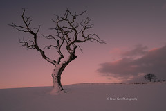 Big Tree - Little Tree (.Brian Kerr Photography.) Tags: winter snow cold tree sunrise landscape cumbria thepowerofnow