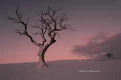Big Tree - Little Tree (.Brian Kerr Photography.) Tags: winter snow cold tree sunrise landscape cumbria ☆thepowerofnow☆