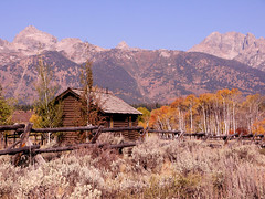 Tetons and cabin (moelynphotos) Tags: mountains fall fence grandtetons nationalparks moelynphotos dirtcheapphototours