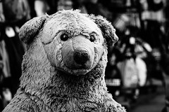 Berlin (Apathy) Bear (DOKTOR WAUMIAU) Tags: 90mm blackwhite d7200 ishootraw nikon berlin blackandwhite blackandwhitephotography lightroom street tamron vscofilm depthoffield bokeh stuffed toy cuddle bear softtoy