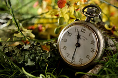 The watch of grandpa (Beatriz-c) Tags: grandpa watch clock abuelo reloj bolsillo windup stil life bodegn yellow amarillo green verde nature naturaleza naranja orange memory memoria recuerdo tribute homenaje