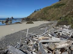 the wood builds (carolyn_in_oregon) Tags: oregon pacificocean ecolastatepark coast crescentbeach