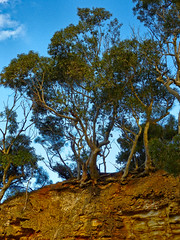 Trees in relief (elphweb) Tags: falsehdr fhdr seaside trees forest bush foliage australia rocky rocks outdoor