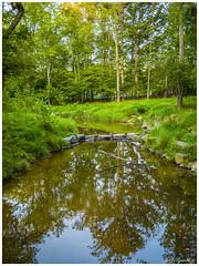 A Walk In The Woods (jiroseM43) Tags: panasonic gx7 20mm lumix