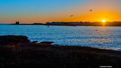 Birds in the way ! (Facebook : photographe.maximepateau) Tags: birds way sunset coucherdesoleil coucher de soleil sea mer ocan ocean seascape bretagne morbihan cte sauvage quiberon evening soir soire maxime pateau