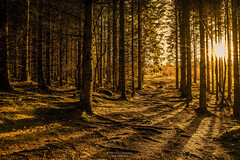 The Path Out (Fredrik Lindedal) Tags: sun sweden sverige sunlight sunrays orange green trees tree woods forest nikon onewithnature fredriklindedal intothewild serene landscape visitsweden