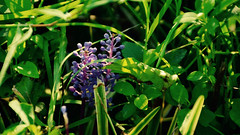 Purple Among the Green (joshuaberneking) Tags: nikon d5100