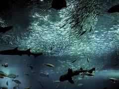 Waterworld (Fehlfokus) Tags: enoshima aquarium japan