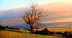 Winter Time in Wexford (murtphillips) Tags: morning winter sky tree field branch martin time phillips wexford murt monasootha mygearandme rememberthatmomentlevel1