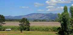 Sweet crop of cane (SamSpade...) Tags: mountains field cane truck landscape high sweet sugar worker elsalvador 477 106712dec