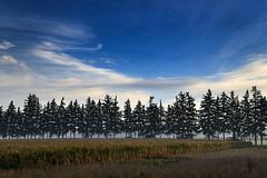 Slight morning mist beyond the trees (angie_1964) Tags: morning blue trees sky cloud mist ontario field rural explore evergreen nikon2485mmafs nikond800e