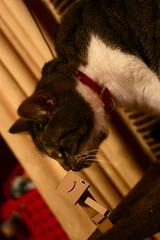 Danbo meets Hello Kitty. (Canon Mad) Tags: cat kitten kiss hellokitty kitty danbo