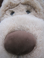 Stuffed Animal (shaire productions) Tags: toy toys photography photo image photograph stuff merchandise imagery