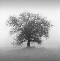 (windrides) Tags: tree t hasselblad greece 500c kodaktrix f28 planar 80mm carlzeiss kodaktmax film:iso=400 film:brand=kodak film:name=kodaktrix400 developer:brand=kodak developer:name=kodaktmax filmdev:recipe=8110