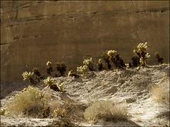 Cholla Garden (W9JIM) Tags: cactus anzaborrego w9jim cholla g12 sandstonecanyon abdsp