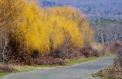 (katunchik) Tags: nature natur bulgaria priroda bulgarie  bulgarien proda bulharsko primorsko prroda