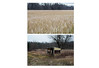 Neon Field and Old Shed (nichole.alyse) Tags: field yellow diptych shed projects rit tych