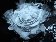 feLLinG is sOoOoOo***dEPP******* (misankei; ) * stArs ~ tiMe* ~ *_* ~blessed*2014) Tags: bw flower art day scene harmony feeling moment