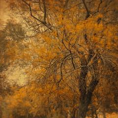 Parque de Zafra III (jesusgag) Tags: flora memoriesbook tatot oracope magicunicornverybest magicunicornmasterpiece sailsevenseas coppercloudsilvernsun bestevergoldenartists