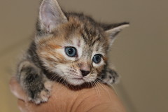 Putty Tats - unedited.....(Explored)....its a girl (Jak 45) Tags:
