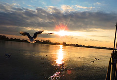 Sunset Elbe (sabine1955) Tags: winter sunset wasser day cloudy seagull möwe sonne elbe