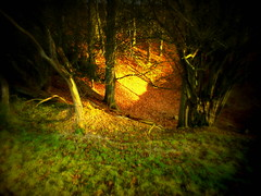 Nettlebed003 (Beyonder) Tags: shadow blur tree saturation fade sharpen lomoish boost warmify holgaish ortonish