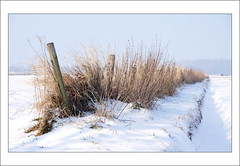 Alongside the Ditch (scrabble.) Tags: winter snow cold nature netherlands countryside frost chilly wintertime goedereede winterlandscape zuidholland naturelandscape alongsidetheditch winter2013
