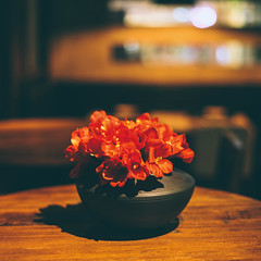 (Jacz Tse) Tags: life light flower 6x6 night canon square eos 50mm cafe silent bokeh f14 lifestyle 50mm14 cinematic canton 50mmf14 inmylife 5dmarkii vscoflim
