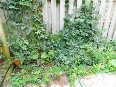 Toronto Playter Estates backyard clean up before by Paul Jung Gardening Services (Paul Jung Gardening Services) Tags: pauljunggardeningservices weeding playterestates broadview torontogardencleanup
