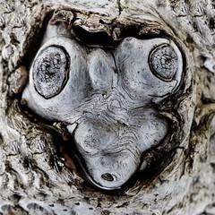 driftwood .... featured (Edinburgh Nette) Tags: driftwood st cyrus beach july16 ribbet z