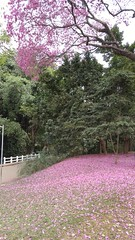 20160811_113159 (filipealves1) Tags: sopaulo trees nature natureza parque ibirapuera brazil brasil